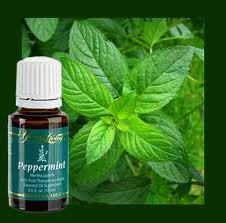 peppermint-yl